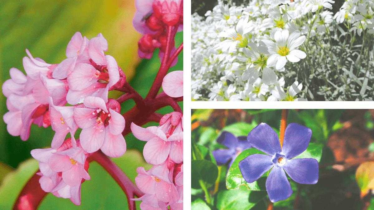 Plantes Pour Talus Sec chartres - couvrir le sol de plantes – zéro phyto